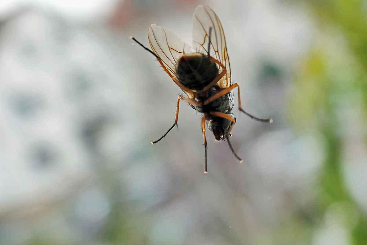 Insektenentferner Lackierung Autolackierung